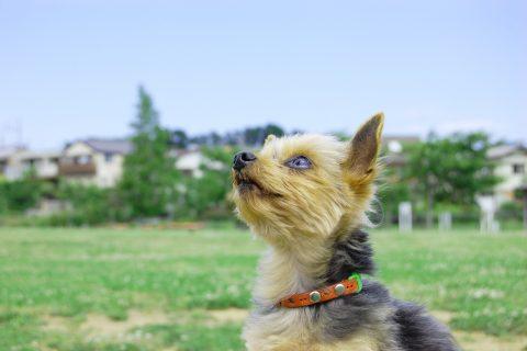 弊社スタッフが「愛犬家住宅コーディネーター」を取得しました!